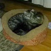 Photo of Cat Ice for Happy Tails