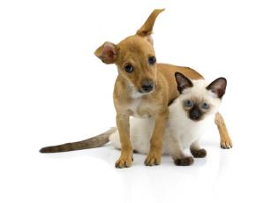 Picture of a puppy and kitten representing the DAWS Foster Program