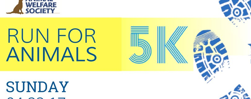 Graphic depicting the 5K race info